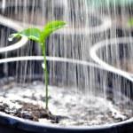 planta joven — Foto de Stock