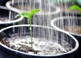 Jungpflanzen — Stockfoto