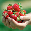 Fresh picked strawberries — Stock Photo #6695911