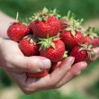 Fresh picked strawberries — Stock Photo #6695960