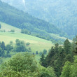 Black Forest in Germany - Stock Photo