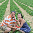 Young couple picking strawberry — Stock Photo
