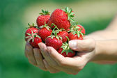Fresh picked strawberries — Stock Photo