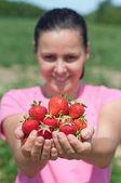 新鮮なイチゴを選んだ — ストック写真