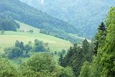 Bosque negro en alemania — Foto de Stock