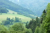 Forêt-noire en allemagne — Photo