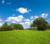 Grassland with trees and blue sky — Stock Photo