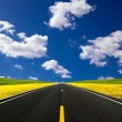 Road travelling through a Canola Field — Stock Photo