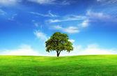 Field,tree and blue sky — Stock Photo