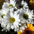 Bunch of summer flowers - Stock Photo