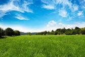 Grassland - nature, landscape — Stock Photo