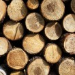 Stockpile of logging timber showing annual rings — Stock Photo