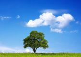 Meşe ağacı ve bulutlu gökyüzü — Stok fotoğraf