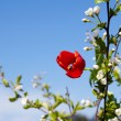 Beautiful blossoming branch — Stockfoto