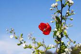 Beautiful blossoming branch — Stock Photo
