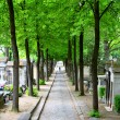 Stock Photo: Spring cemetery alley