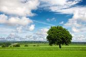 Boom op groene veld en bewolkte hemel — Stockfoto