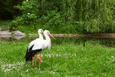 White stork and green nature — Stock Photo