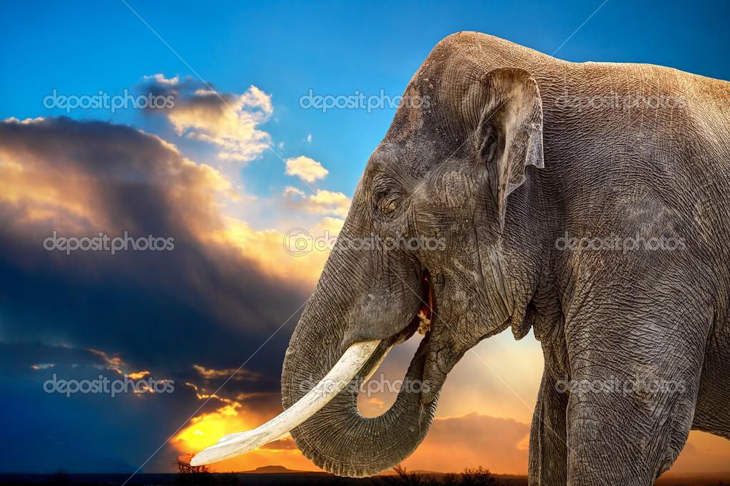 African Elephant — Stock Photo #5734793