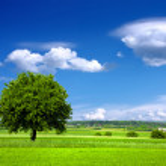 Green environment — Stock Photo