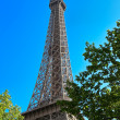 Eiffel tower among the trees — Stock Photo