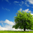 Green tree on blue sky — Stock Photo
