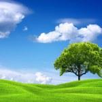 Пейзаж природа — Стоковое фото
