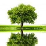 zielony świat — Zdjęcie stockowe
