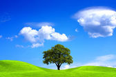 Oak tree and blue sky — Stock Photo