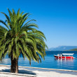Stock Photo: Adriatic Holidays