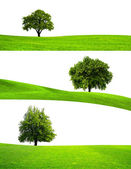 Green tree nature — Stock Photo