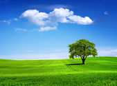 Tree on green field — Stok fotoğraf