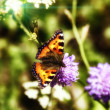 Butterfly — Stock Photo #6293811