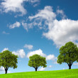 Three trees on a green hill — Stock fotografie