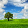 Tree and green landscape - Stock Photo