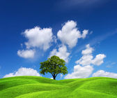 Green nature landscape — Stock Photo