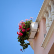 Flowers on the balcony — Stock Photo