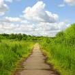 Stock Photo: Path in green park