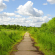 Stock Photo: Path in the green park