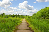 Path in the green park — Stock Photo