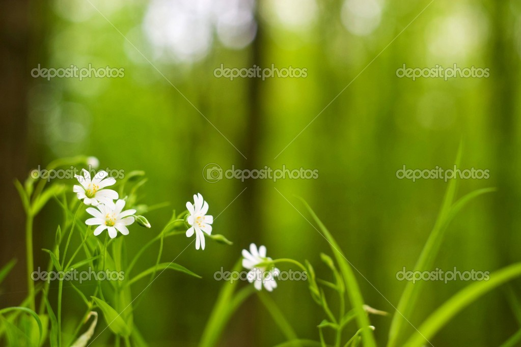 Flowers on colorfull background - macro photo — Stock Photo #5616337
