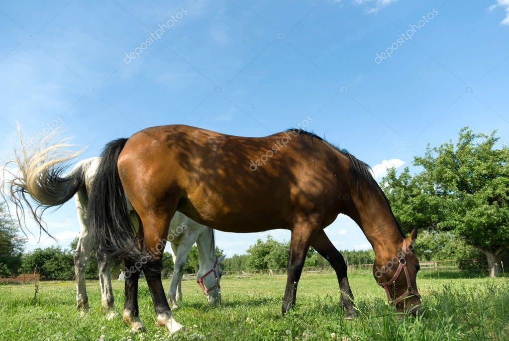 Beautiful Horse in a Green Meadow in sunny day  Stock Photo #5914603
