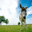 Donkey - Stock Photo