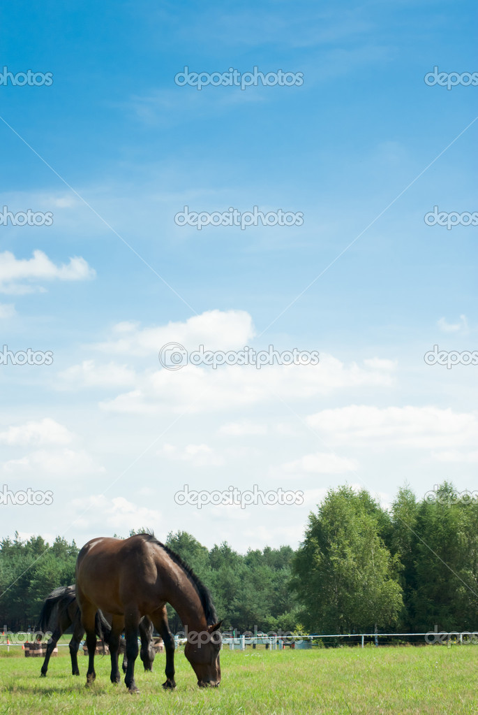 Horse in a green meadow in sunny day, animals series  Stock Photo #6211040