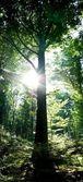 Strom v lese — Stock fotografie