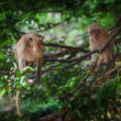 Royalty-Free Stock Photo: View of  nice wild monkey natural tropical environment