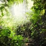 Фрагмент как вид прекрасный летний лес с солнце светит через th — Стоковое фото