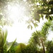 Fragment like view of nice summer forest with sun shine getting through th — Stock Photo #5864958