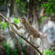 View of  nice wild monkey natural tropical environment - Stock Photo