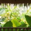 Tropic view - Stock Photo